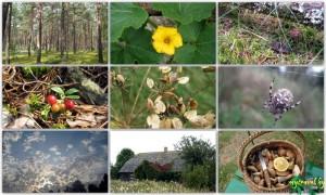 9 Фотографий Природы Беларуси - Осень