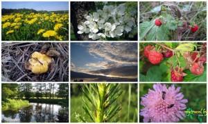 9 Фотографий Природы Беларуси