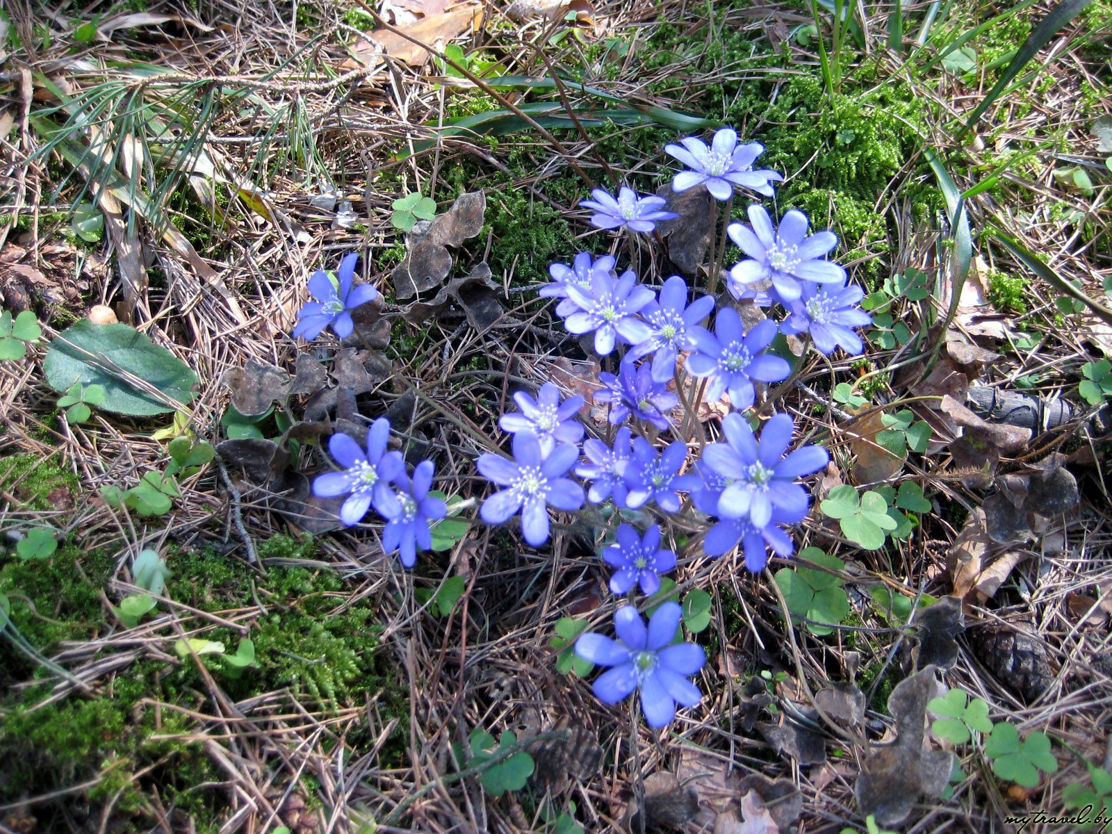 Красивые лесные цветы фото