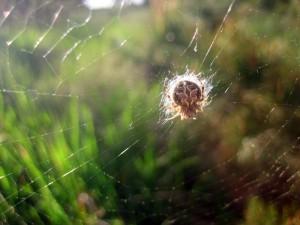 Четыре фотографии из серии «Микромир – найди паука»