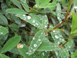 Микромир природы – капли дождя