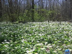 Фотографии природы – в ожидании весны!