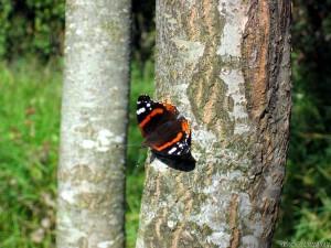 Бабочка (приближение)