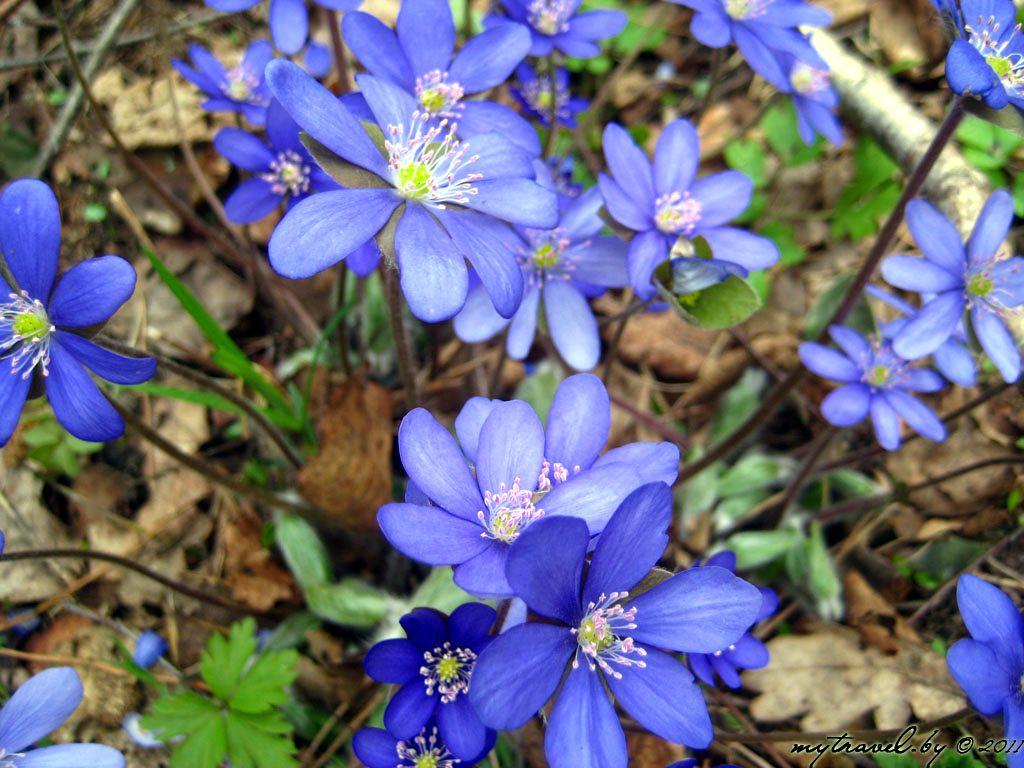 Первые цветы весны. Многообразие форм и красок позволит
