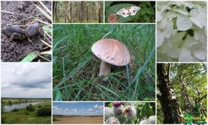 Фотографии Природы Беларуси - Лето 2009