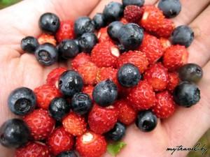 Лесные ягоды на ладони
